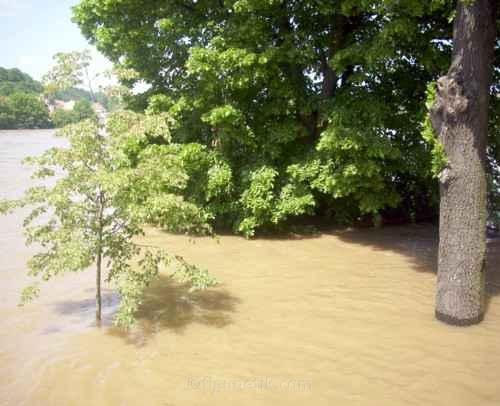 hochwasser-meissen-06-06-2013-um-12-59-uhr (13)